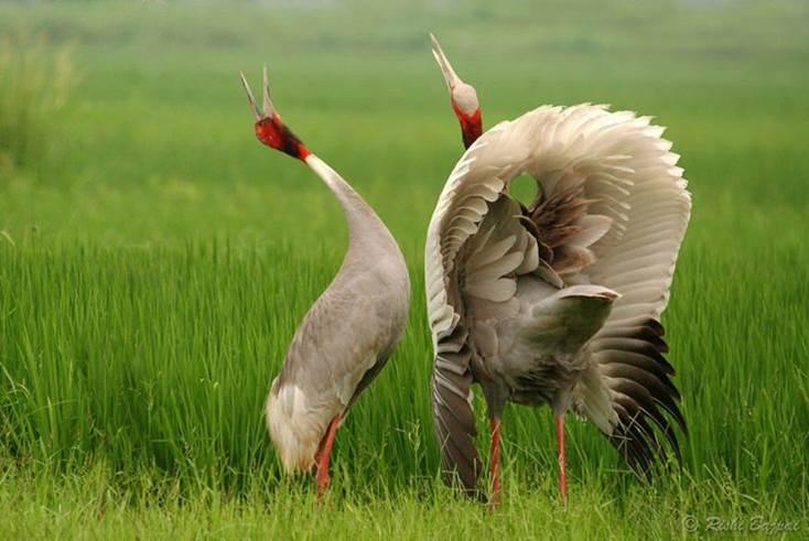 Oiseaux 14