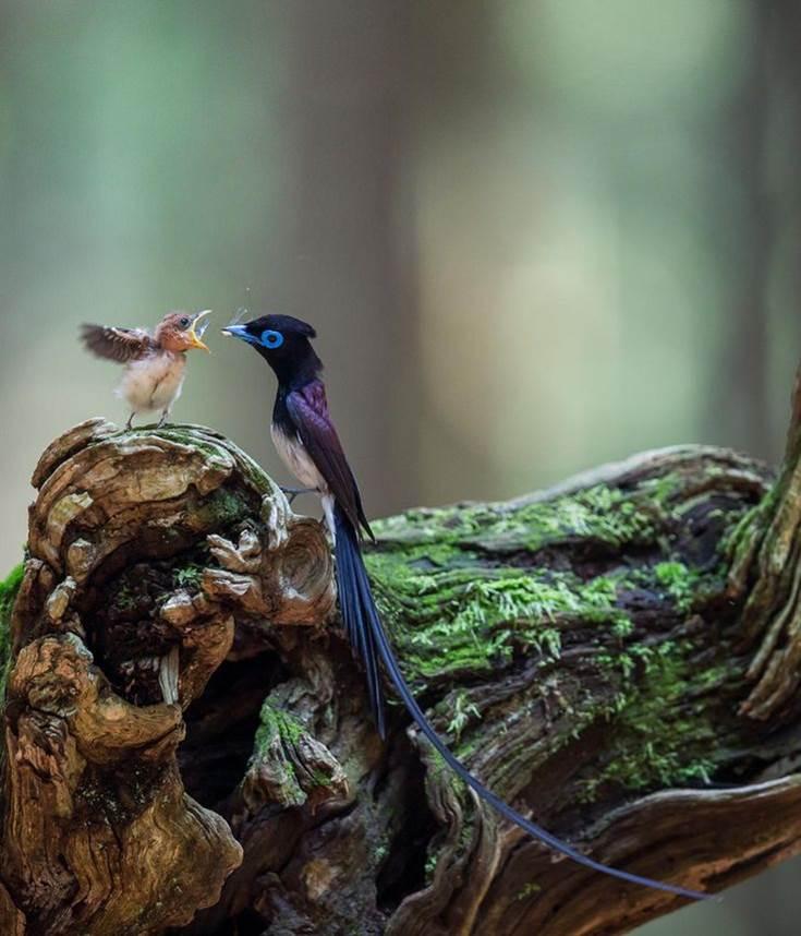 Oiseaux 16