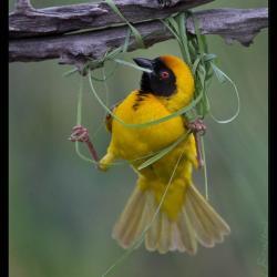 Oiseaux 18