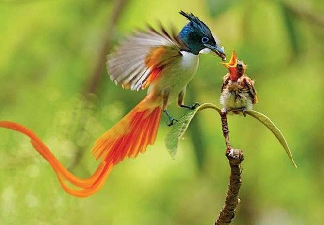 Oiseaux 20