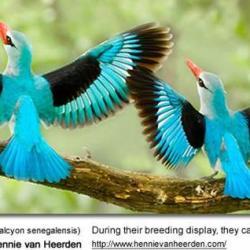 Oiseaux 21