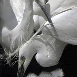 Oiseaux 22