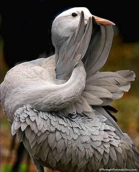 Oiseaux 29