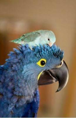 Oiseaux 31
