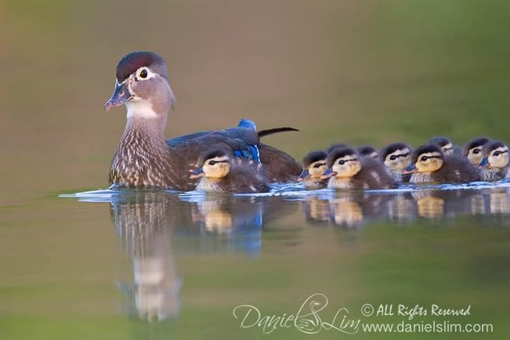 Oiseaux 34