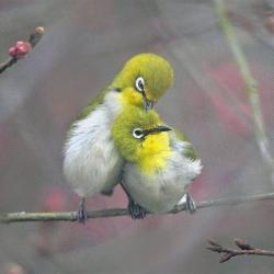 Oiseaux 38