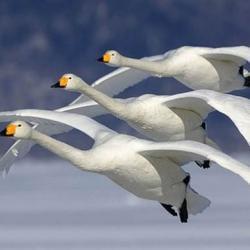 Oiseaux 44