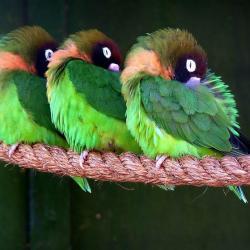 Oiseaux 45