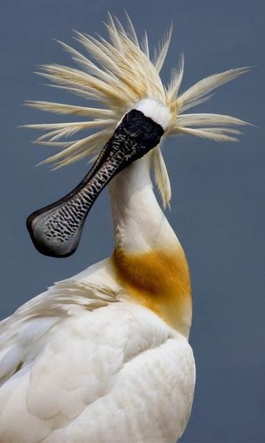 Oiseaux 48